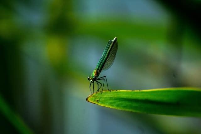 חרק - תמונה
